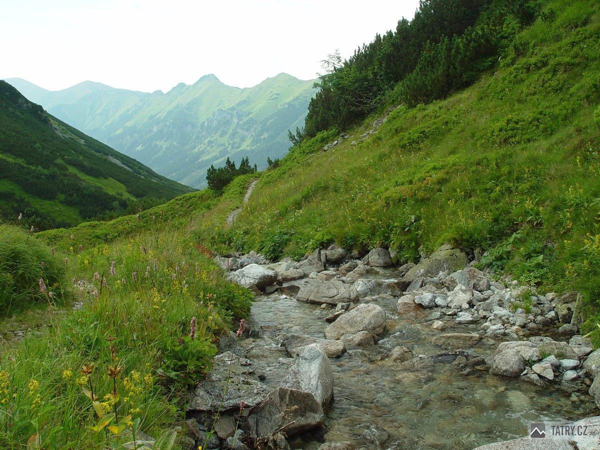 Tichý potok v Zadné Tiché dolině