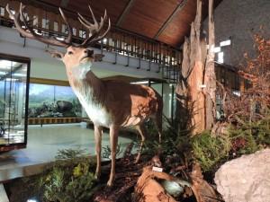 Jelen v muzeu TANAPu