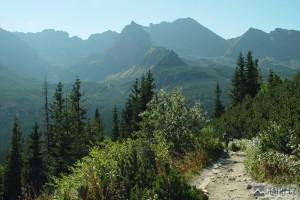 Svinica cestou do Doliny Gąsienicowy