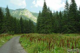 Asfaltová silnička v Tiché dolině