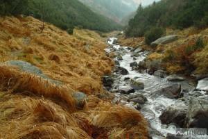 potok v Bystré dolině při výstupu