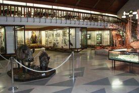 Muzeum TANAPu