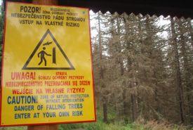Nebezpečí pádu stromů
