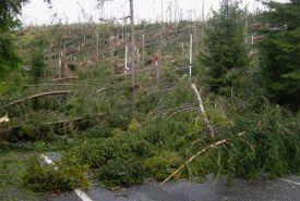 Polámané stromy, ktoré za sebou nechal prepadavý vietor na Vyšných Hágoch (květen 2014) - autor Igor Cpin