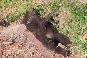Mrtvé medvídě