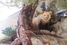 Brloh medvěda v Muzeu TANAPu