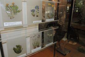 Muzeum TANAPu (foto: Lenka Burdová)
