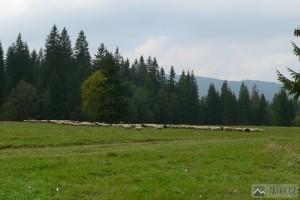 cestou z Oravice do Juráňové doliny