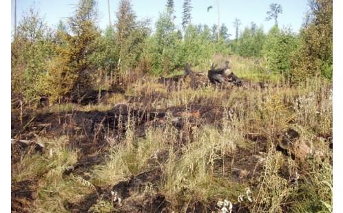 Požár v roce 2013
